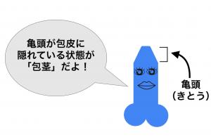 亀頭と包茎の説明の画像